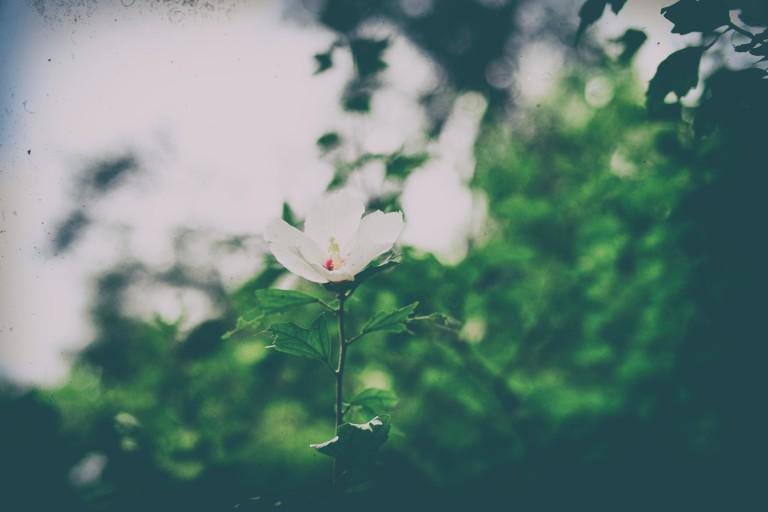 9_Nik.jpg