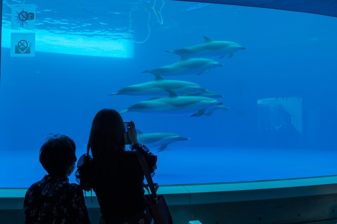娘と母親もスマホのカメラを振り回していました。