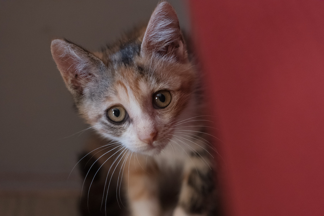 Leica SL2-Sで撮影 クソ高い機材で猫撮影です。