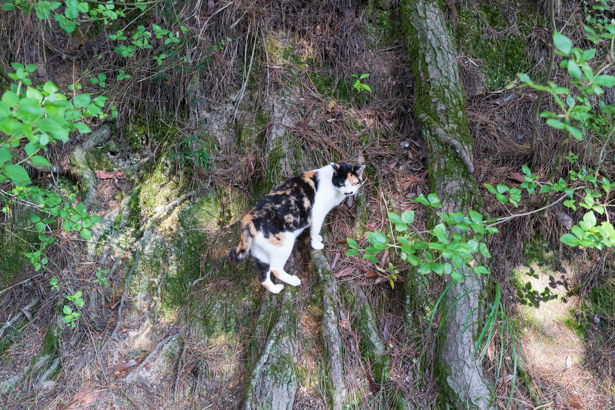 こんな猫写真にそのような大きな画素数は果たして必要なのでしょうか…。。