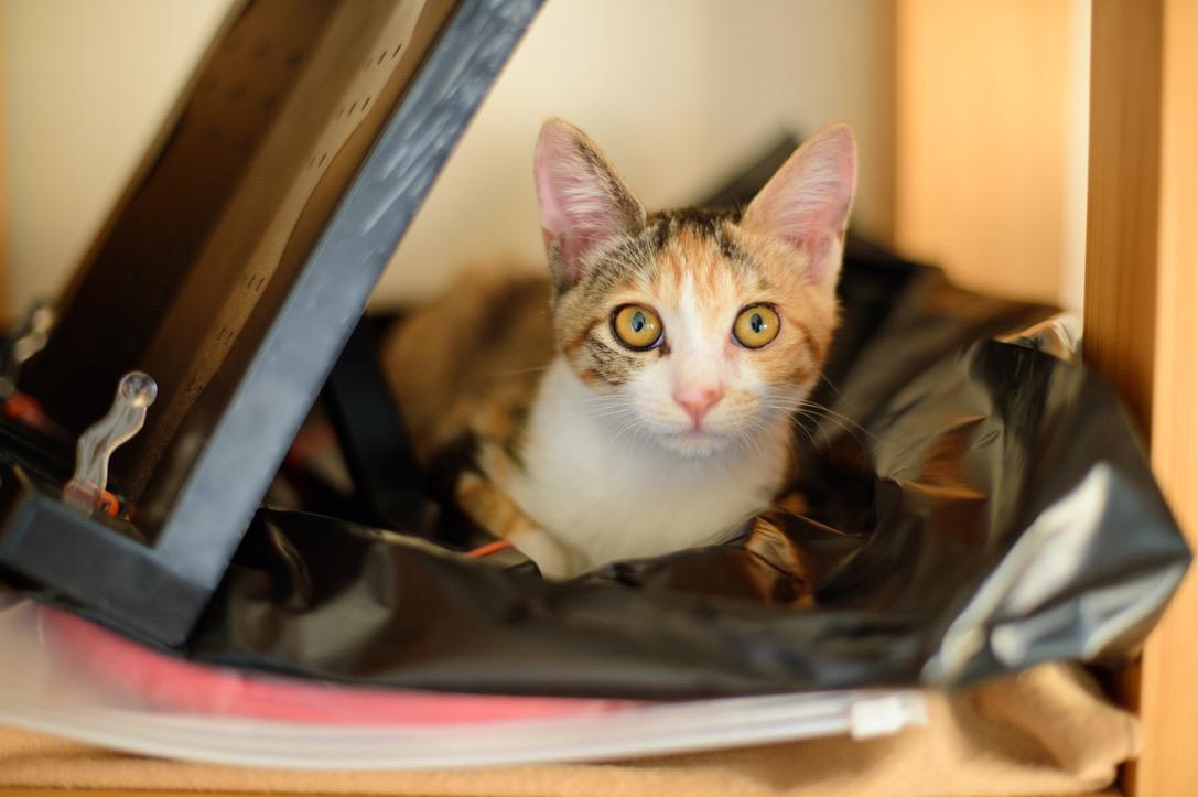 なぜ猫は、ごちゃごちゃした所に行くのだろうか…。絞りの表記がないのはF 2で撮っています。