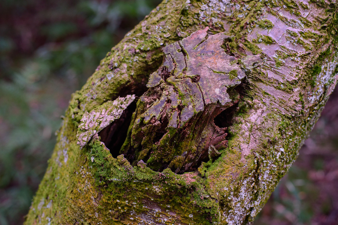 F4 これぐらいピント面が広くなると失敗しませんね。木と苔の質感描写が素晴らしい。